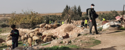 Report on the Attacks of the Israeli Occupation Forces and Settlers on the Palestinian Agricultural Sector in December